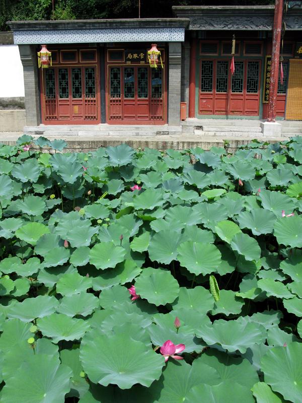 Plantes aquatiques dans les eaux de la rue Suzhou