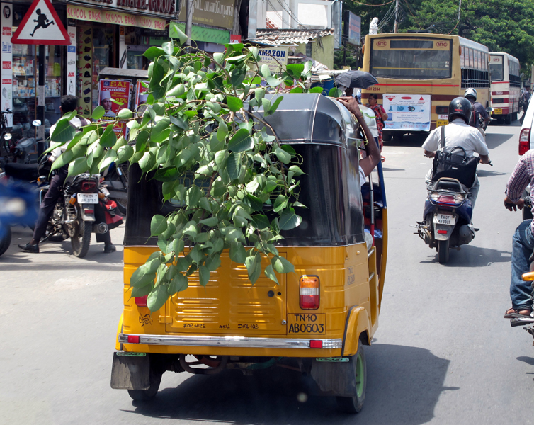 How to carry a bush in Chennai ?